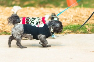 two family pets helping to raise money for cancer